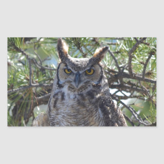 Great Horned Owl in the Tree Sticker