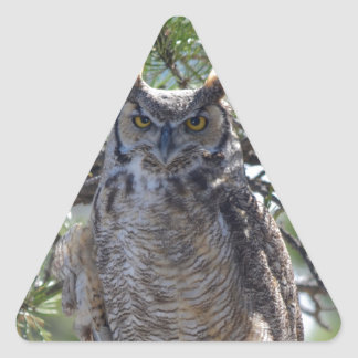 Great Horned Owl in the Tree Triangle Sticker