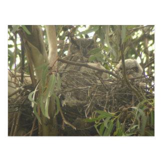 Great Horned Owl nest Postcard