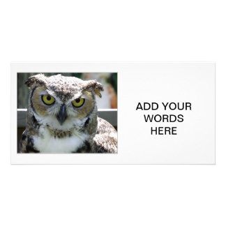Great Horned Owl Photo Cards