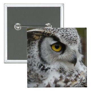 Great Horned Owl Photograph Pins