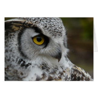 Great Horned Owl Photograph Card