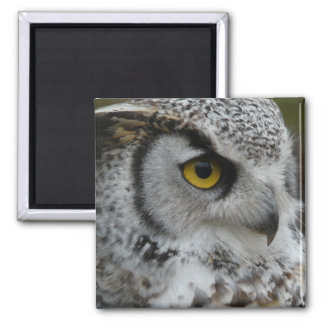 Great Horned Owl Photograph Magnet