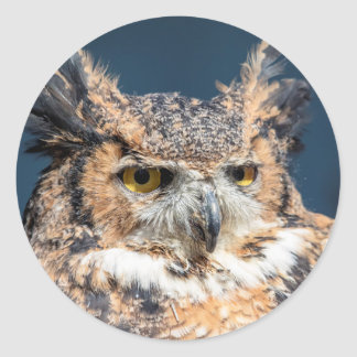 Great Horned Owl Portrait Classic Round Sticker