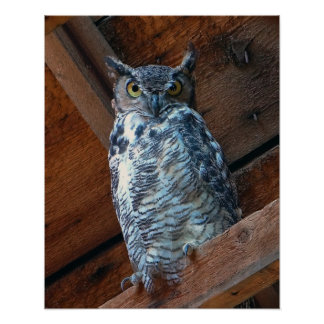Great Horned Owl Poster Print