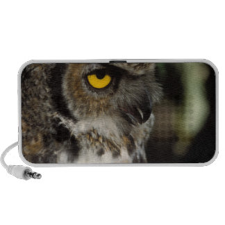 great horned owl, Stix varia, in the Anchorage Laptop Speakers