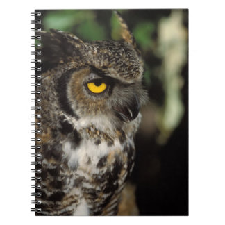 great horned owl, Stix varia, in the Anchorage Spiral Notebook