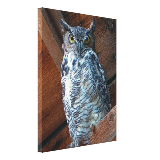 Great Horned Owl Stretch Canvas Print