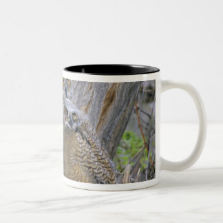 Great Horned Owlets (Bubo virginianus) nest in a Two-Tone Coffee Mug