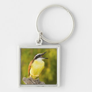 Great Kiskadee calling from perch Keychain