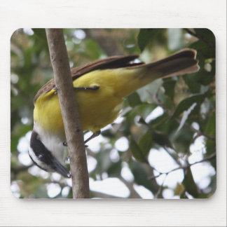 Great Kiskadee with its catch Mouse Pad