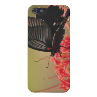Great Mormon (Papilio memnon) on flower, Chiba Cover For iPhone 5/5S