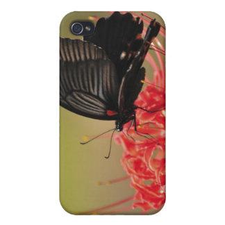 Great Mormon (Papilio memnon) on flower, Chiba iPhone 4/4S Cases