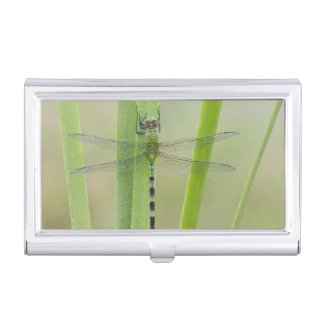 Great Pondhawk , Erythemis vesiculosa, adult Business Card Holders
