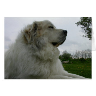 Great Pyrenees Card