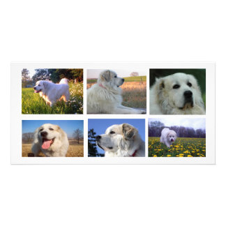 Great Pyrenees Collage Card