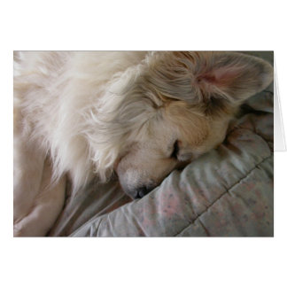 Great Pyrenees Notecard