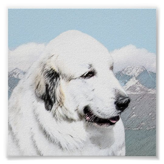 Great Pyrenees Poster