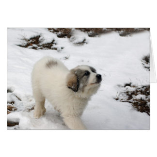 Great Pyrenees Puppy Card