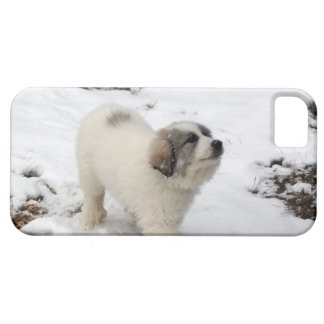 Great Pyrenees Puppy Case For The iPhone 5