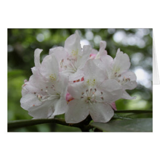 Great Rhododendron Card