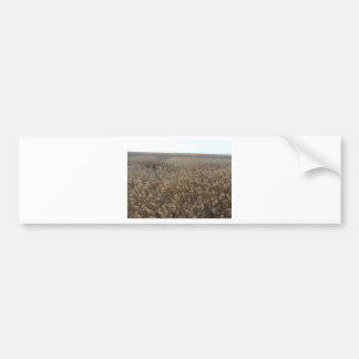 great salt lake shorelands preserve bumper sticker