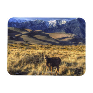 Great Sand Dunes National Park, Colorado Magnet