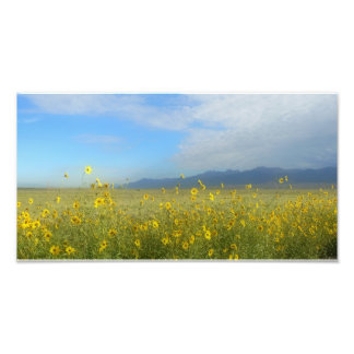 Great Sand Dunes, Sangre de Cristo, flowers Art Photo