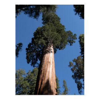 Great Sequoia Postcard