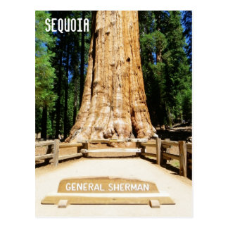 Great Sequoia Postcard! Postcard