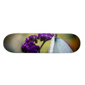 Great Southern White Ascia Monuste Skateboard Decks