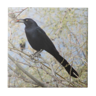 Great-tailed Grackle Tile