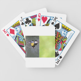 Great tit parent in hole of nest box bicycle playing cards