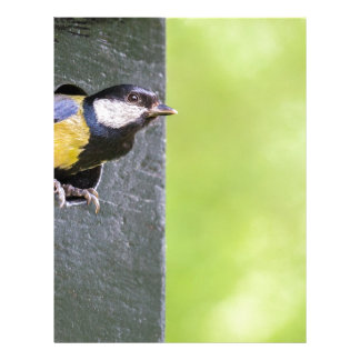 Great tit parent in hole of nest box letterhead