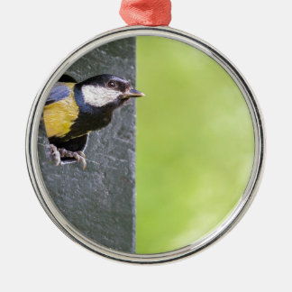 Great tit parent in hole of nest box metal ornament