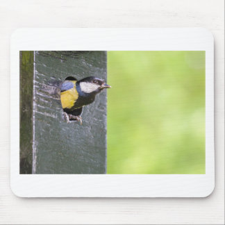 Great tit parent in hole of nest box mouse pad