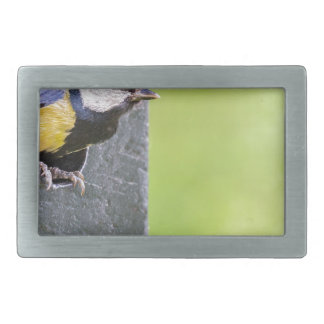 Great tit parent in hole of nest box rectangular belt buckle