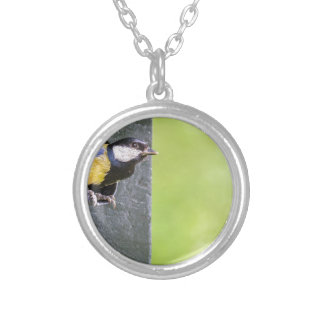 Great tit parent in hole of nest box silver plated necklace