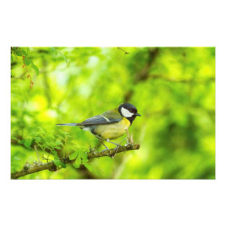 Great tit, parus major stationery