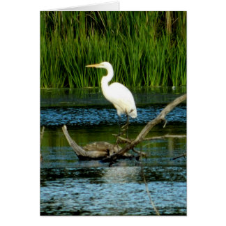 Great White Egret Greeting Card (Blank)