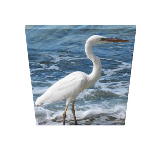 Great White Egret on hunting in surf Canvas Print