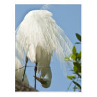 Great White Heron Bottoms Up Postcard