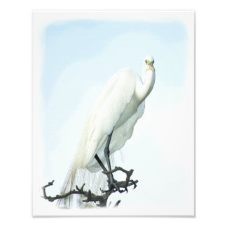 Great White Heron Portrait Photo Print