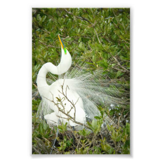 Great White Heron Pose Photograph