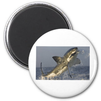 Great white jumping. magnet