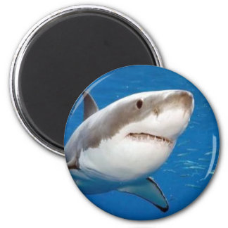 Great White Shark Magnet