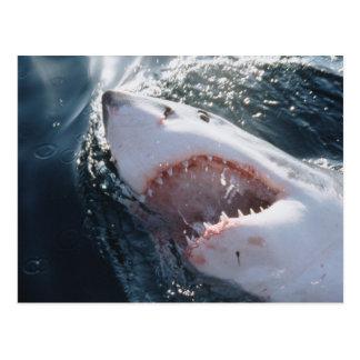 Great White Shark on sea Postcard