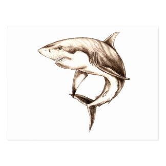 great white shark postcard