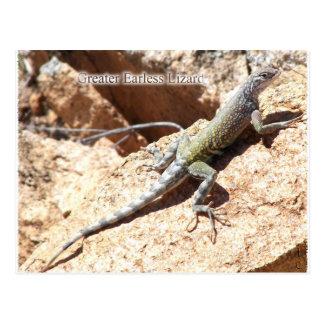 Greater Earless Lizard Postcard