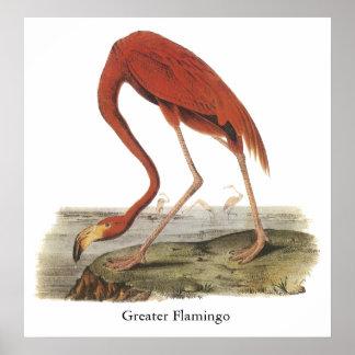 Greater Flamingo John Audubon Posters